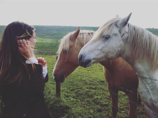 Feeding wild horses in the Cliffs of Moher, Ireland